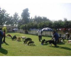 Dog boarding facilities in Gurgaon
