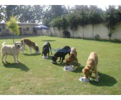 Dog boarding in delhi