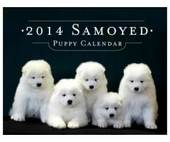 Samoyed puppy price in kochi, Samoyed puppy for sale in kochi