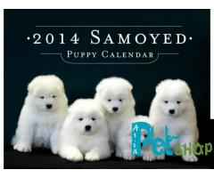 Samoyed puppy price in patna, Samoyed puppy for sale in patna