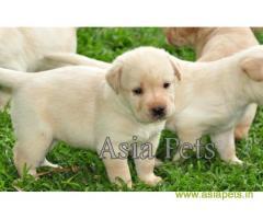 Dog For Sale In Delhi | Dog Price in Delhi