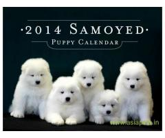 Samoyed puppy for sale in Faridabad at best price