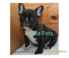 French Bulldog  Puppy for sale good price in delhi