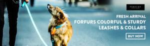 Online pet shop in delhi