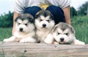 Best Pet Shop Delhi, Dogs for sale, Dog Shops in Delhi