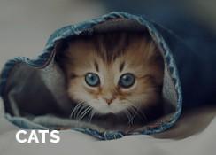 Cats for sale in delhi
