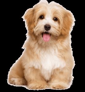 puppy for sale in delhi